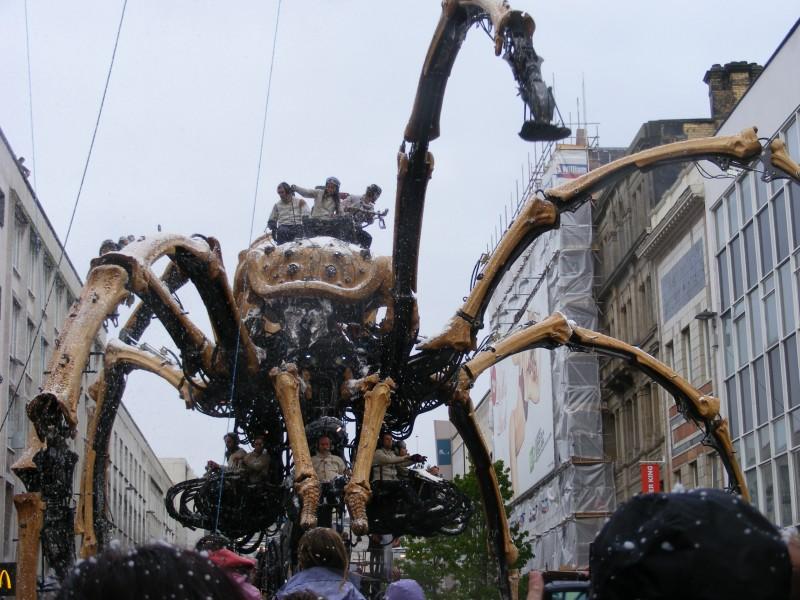 Spider 31